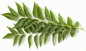 Curry-Leaves-Grey-Hair